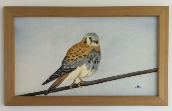 Kestral on a Wire