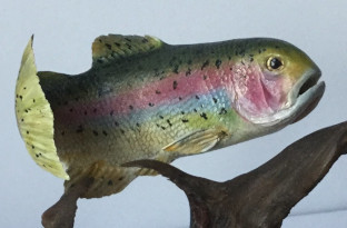 Rainbow Trout 2